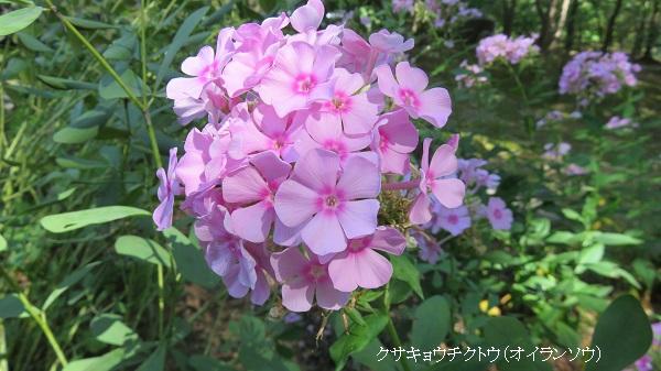 IMG_4386-600.jpg