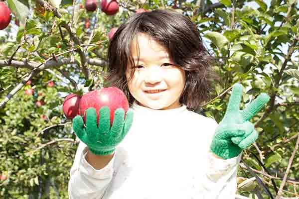 青森りんご 蜜入りおいらせ 通販