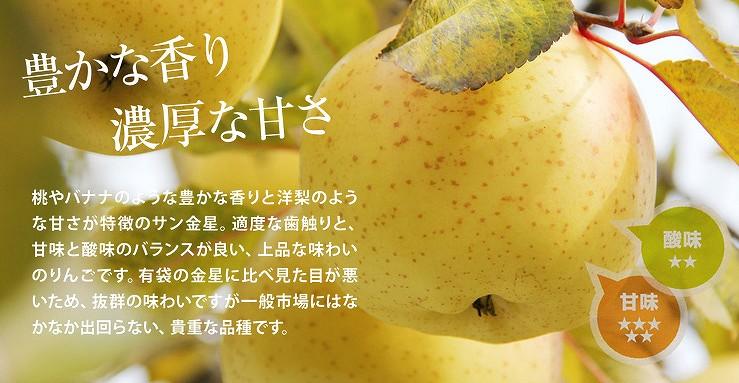 【希少品種】青森りんご サン金星 予約販売開始!