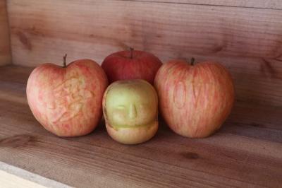 RED APPLE 赤石農園 ハート葉とらずふじりんご3