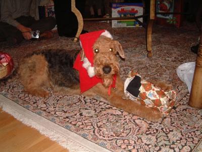 Teddy opening present