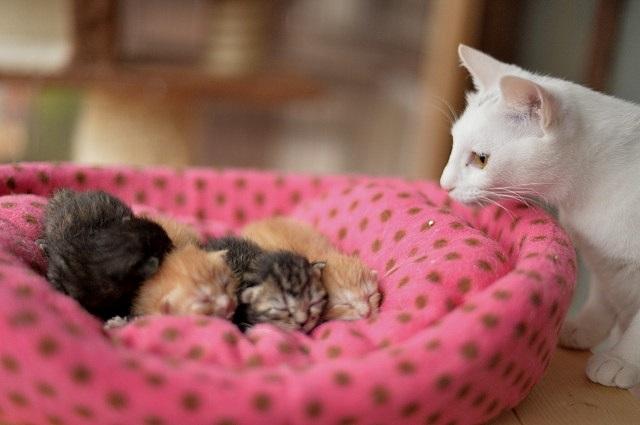 仔猫を見守る母親