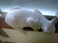 この白さ!本当に野良猫か?