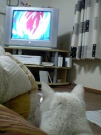 テレビまで…