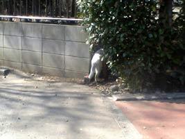 逃げていく白猫