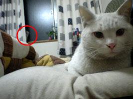 ん?なんだこの猫影は?