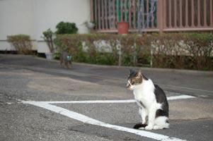 目を光らせ近づく猫が…