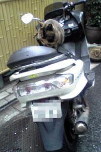 単車に野良ネコ