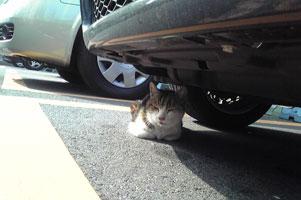 野良猫にも駐車料金とるの?