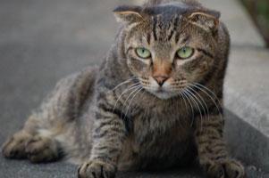 二枚目野良猫スー