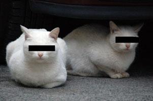 二匹の野良猫。どっちがどっち?