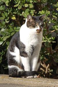 かっこいいゾ!野良猫Gメン・G