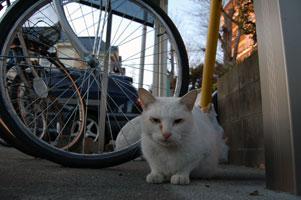 野良猫日記の顔・フー