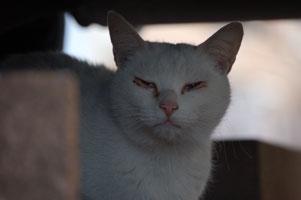 歌舞伎役者のような顔のネコ