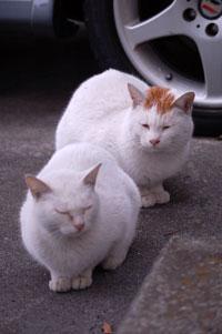 家族愛に満ちた猫たちです