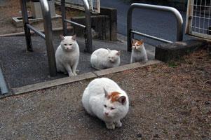 右からチャイ、フーニ、手前はチャロ、そしてフーニ