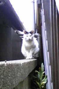 塀に野良猫