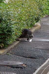 ゴソゴソしている野良ネコ