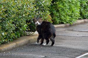 宿主に気づく野良猫