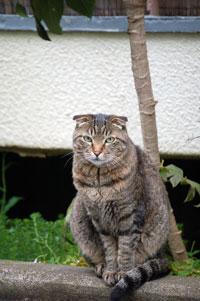 プチセクシー系野良猫