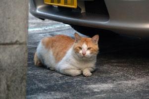 謎の野良ネコ
