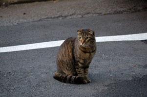 謎の野良猫スーがある