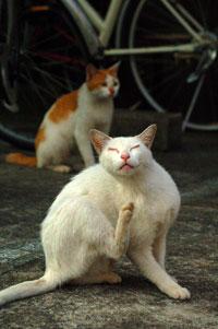 恍惚の表情のネコ