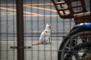 たそがれる野良猫?