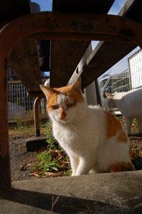 埼玉の野良猫ですから