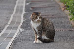 ソックスのそっくしな猫