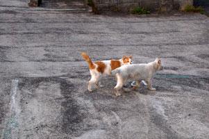 フーニとチャイの平行移動