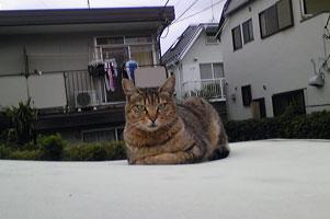 ジープに野良猫