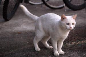 野良猫フーニ