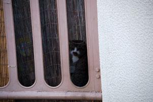猫の心霊写真