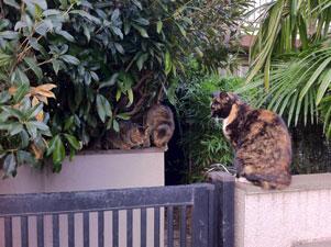 猫屋敷の玄関