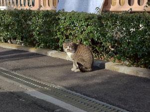 風邪をひいていた猫