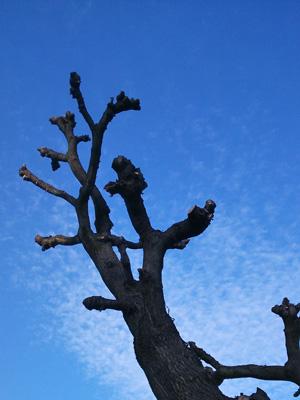 成長した木