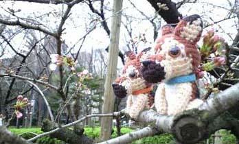桜2頭横向き