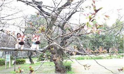 桜2頭正面