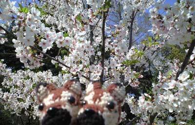 靫桜4/10*