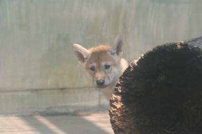オオカミ子供岩陰