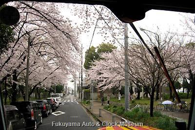 3月31日、名古屋市中川区内の桜並木の街路を進むボンネットバス・日野BA14