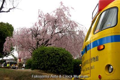 4月7日、名古屋市名東区社台二丁目・上社西部第一公園の枝垂桜とボンネットバス・日野BA14