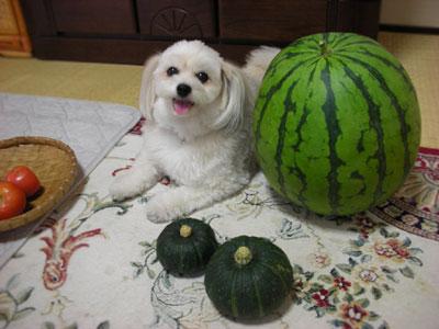 スイカと愛犬