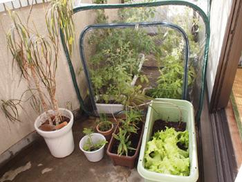 ベランダビニールハウス植物を入れる