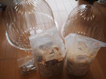 キノコの栽培セット