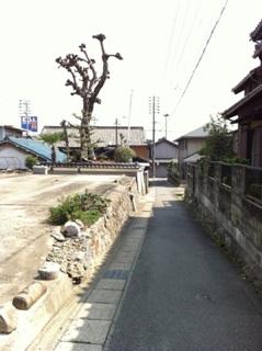 IMG_8366.jpg