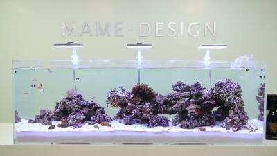 マメデザイン横浜ショールーム1800水槽