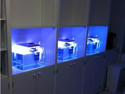 新製品ガラス水槽3台