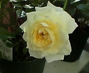 20061102_275166.jpg